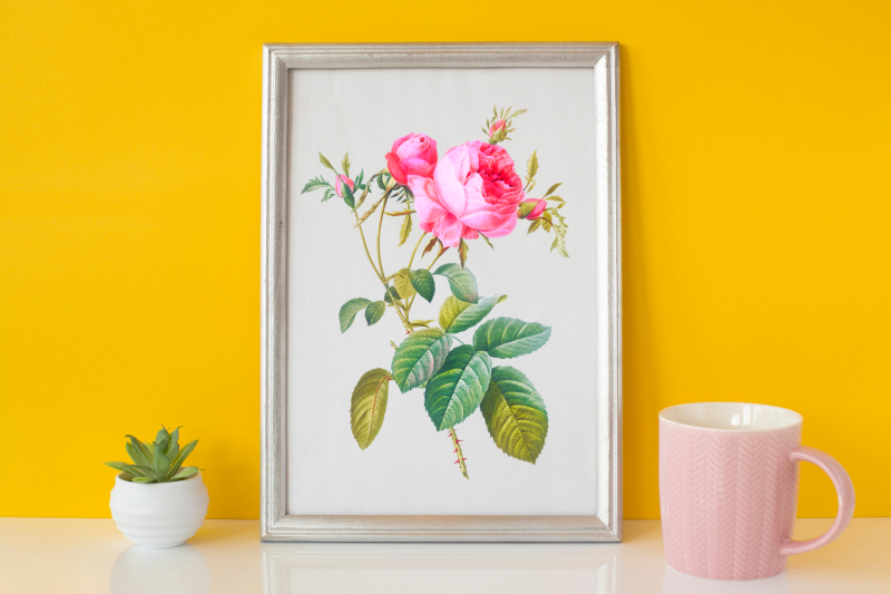 pink-vintage-flowers-botanical-iliustration-vintage-rose