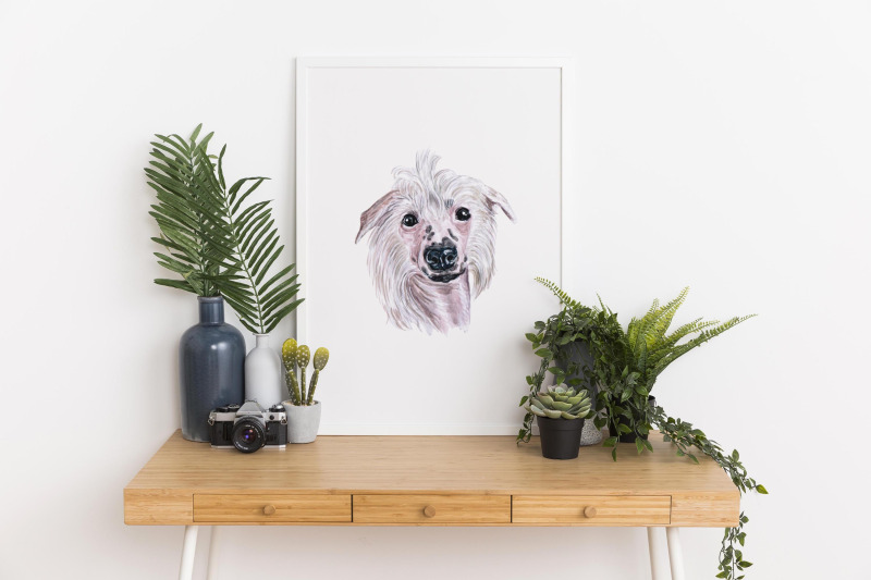 part-3-big-watercolor-illustrations-set-dog-breeds