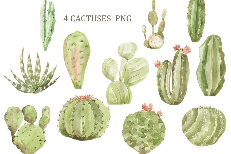 lama-and-cactuses