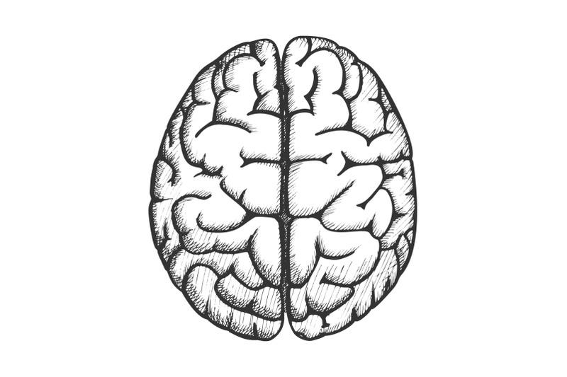 head-organ-human-brain-top-view-vintage-vector