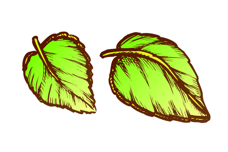basil-leaves-fresh-spice-for-nutrition-ink-vector