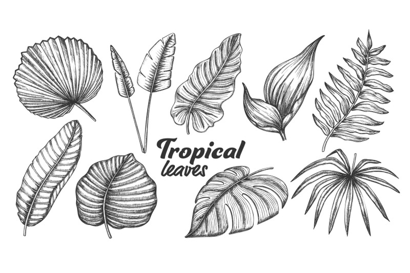 collection-of-different-tropical-leaves-set-vector