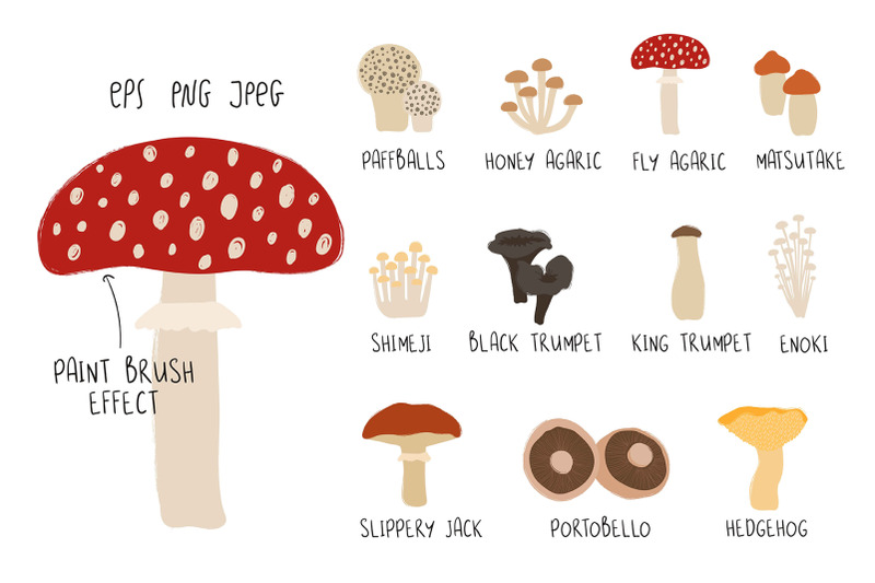 go-for-mushrooms-forest-collection