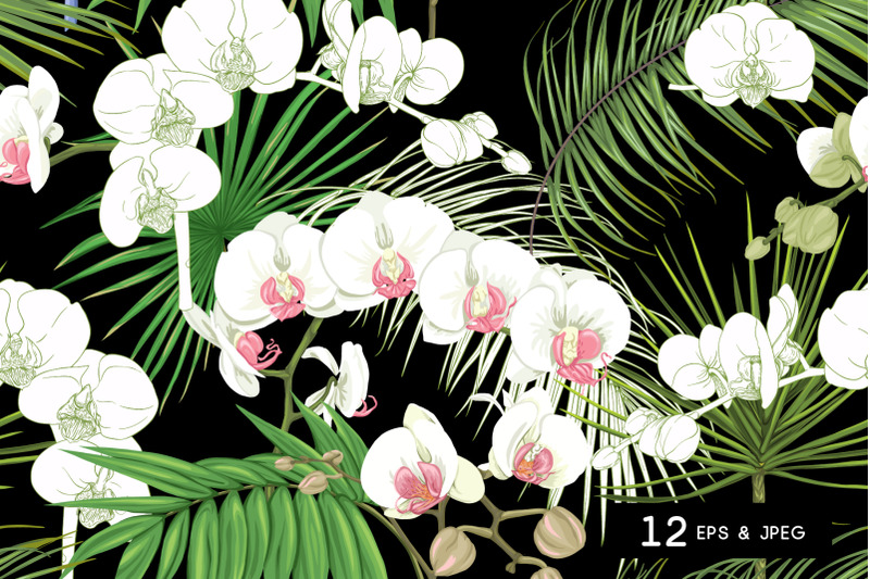 tropical-plants-and-flowers-nbsp