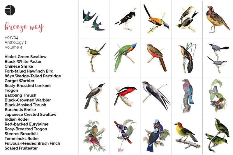 bird-bundle-vintage-clipart
