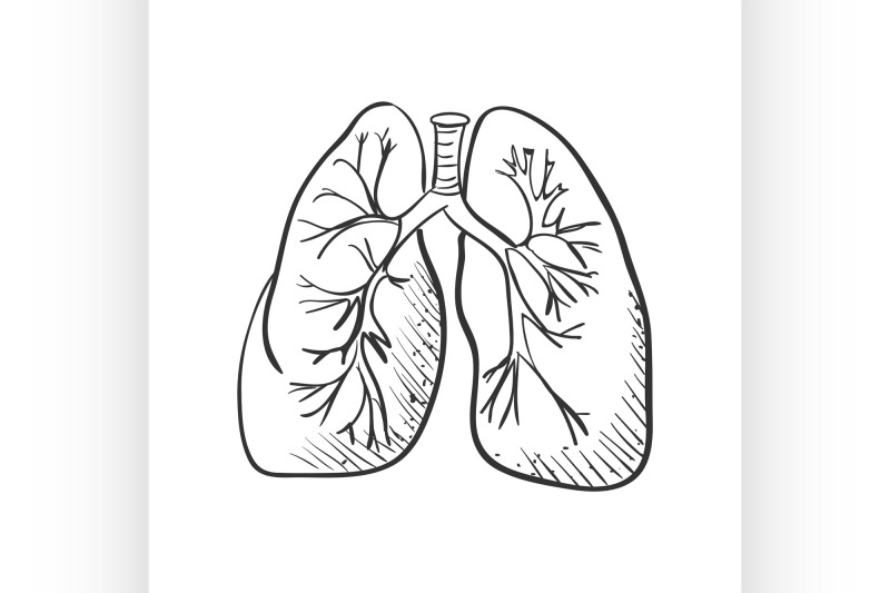 lungs-doodle-drawing-medical-background