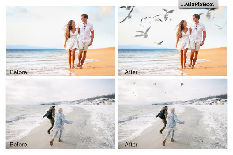 seagulls-photo-overlays
