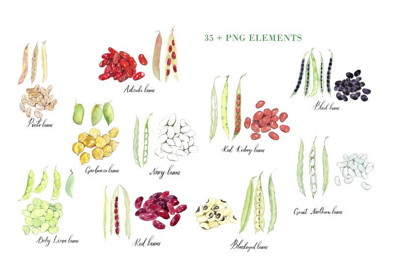 watercolour-beans-illustration-png