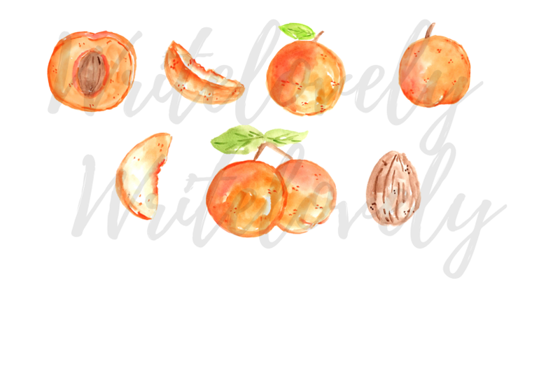 watercolor-apricot-fruit-clipart