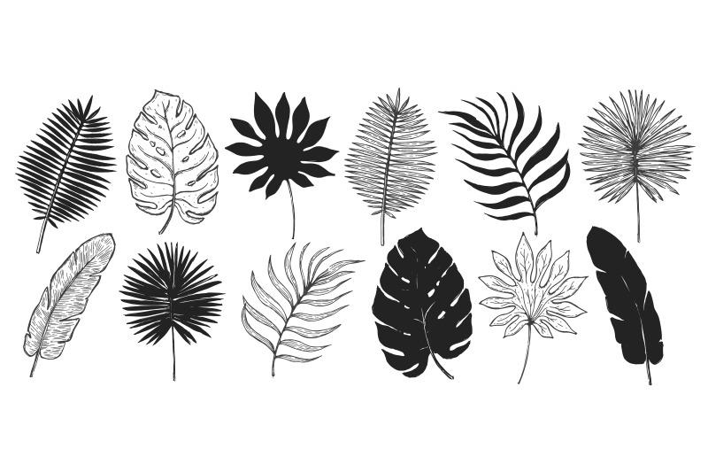 tropical-set-plant-silhouette