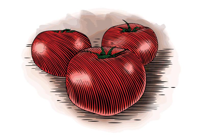 woodcut-tomatoes