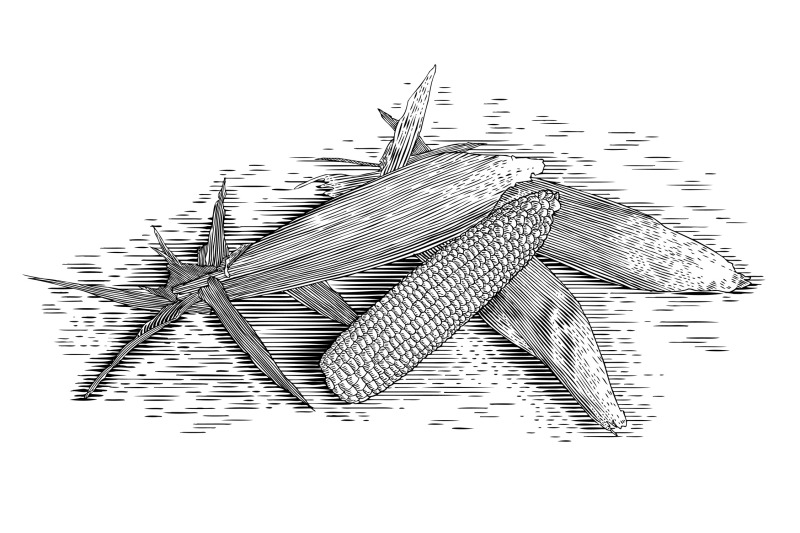 woodcut-corn-cobs