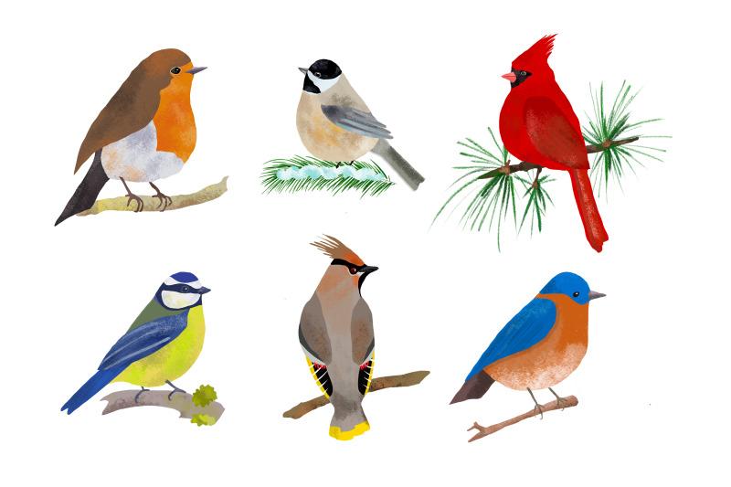 birds-illustration-clip-art-png