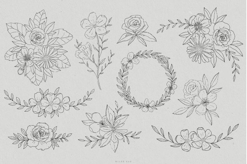 olivia-botanical-sketch-vectors-hand-drawn-illustrations