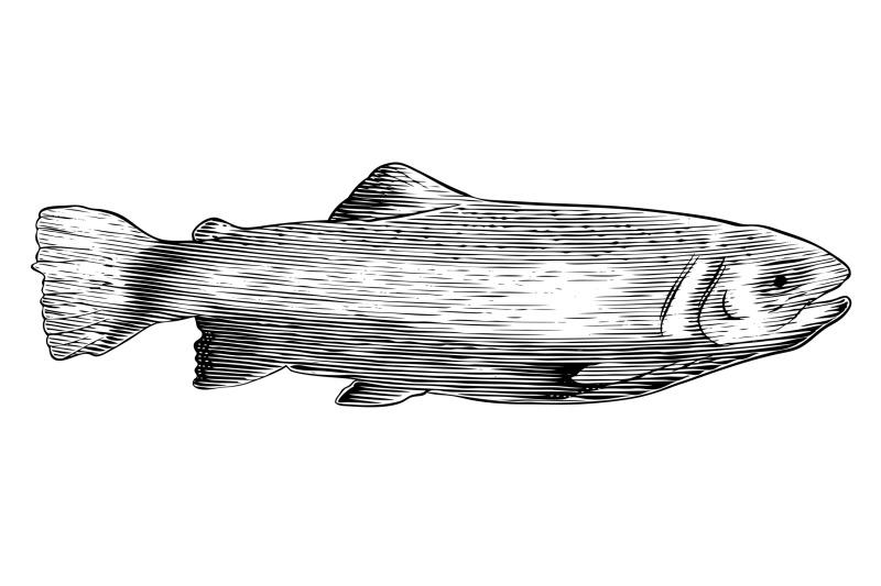 woodcut-trout