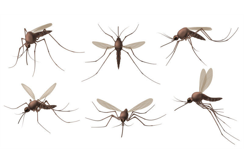 realistic-mosquito-blood-sucking-insects-peddler-of-dengue-zika-vir