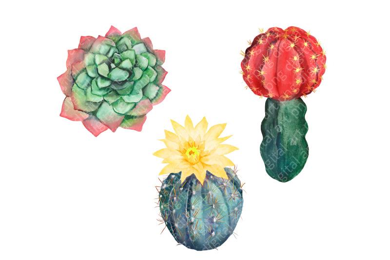 watercolor-cactus-clipart-watercolor-flower-clipart-tropical-exotic