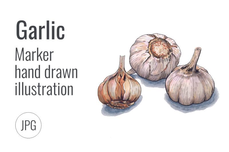 garlic-hand-drawn-marker-illustration