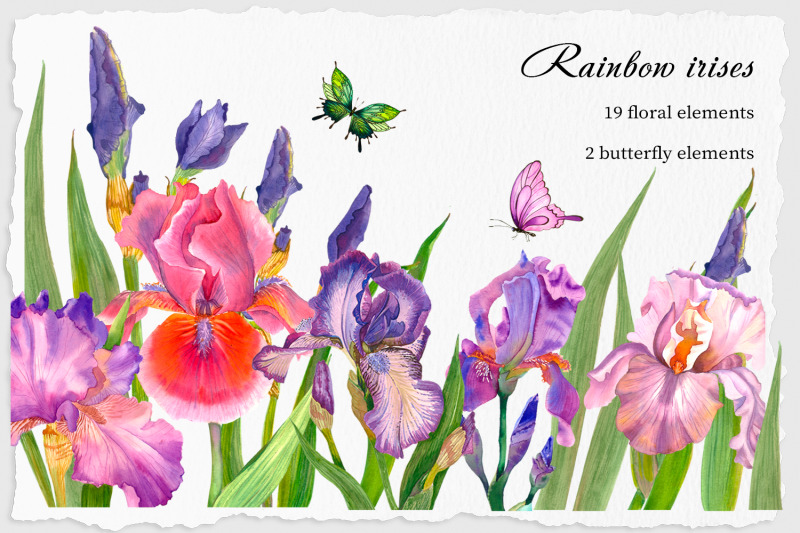 beautiful-elegant-watercolor-iris-flowers