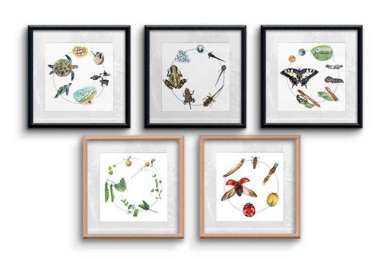 watercolour-life-cycles-poster-bundle