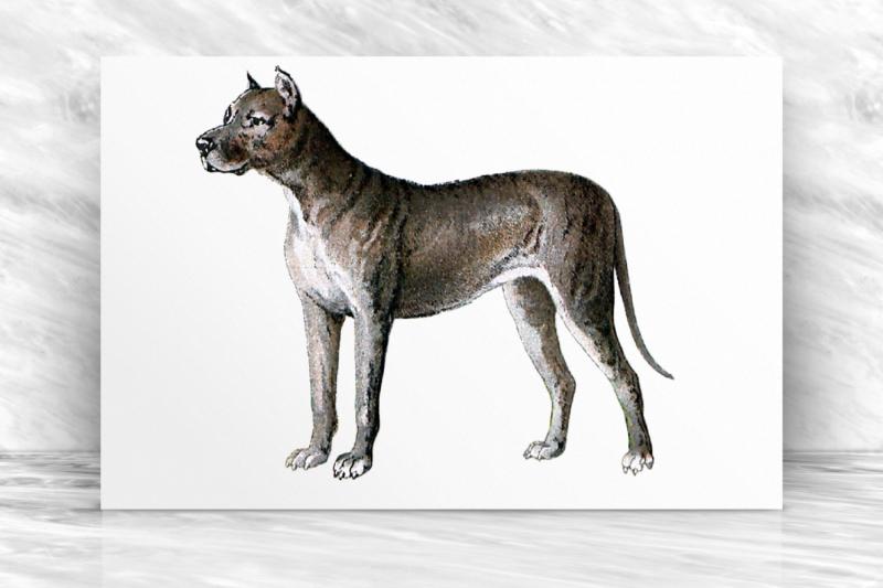 vintage-dog-illustration-farmhouse-antique-french-decor