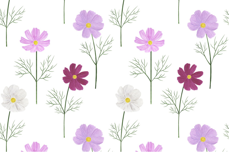 collection-of-illustrations-cosmea-flowers-watercolor