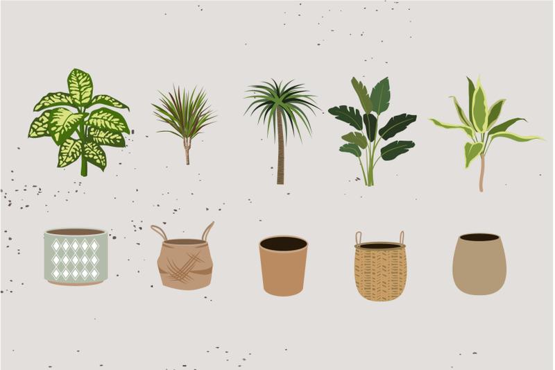 indoor-plants-house-plants