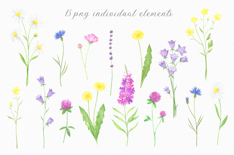 summer-wildflowers-watercolor-collection