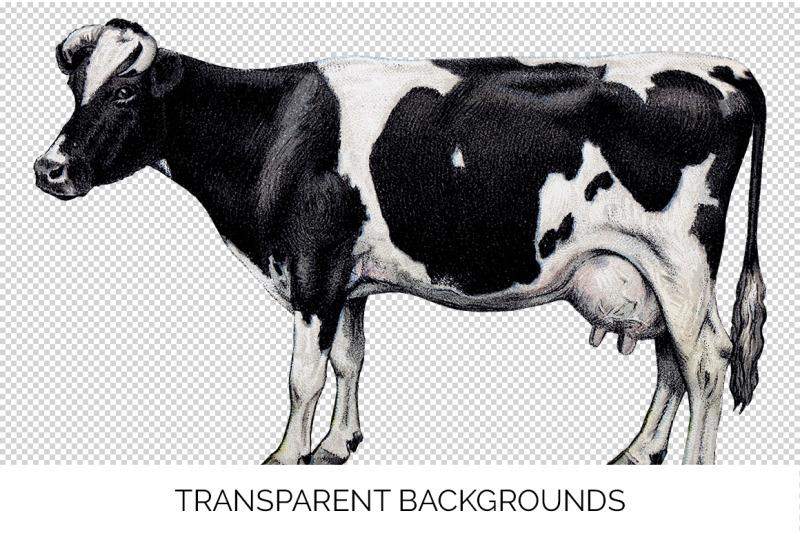 cow-clipart-holstein