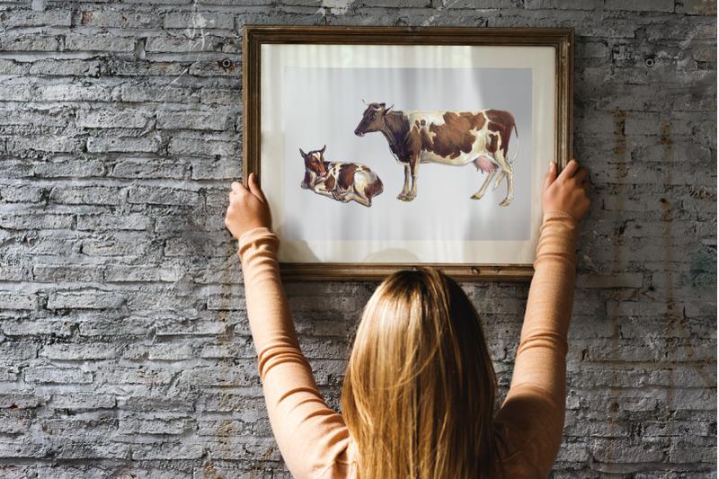 cow-clipart-alderney