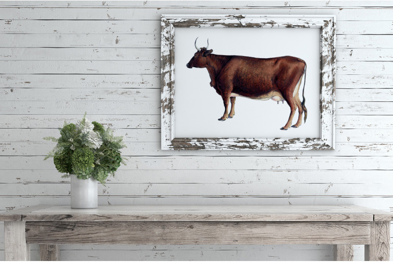 cow-clipart-kerry