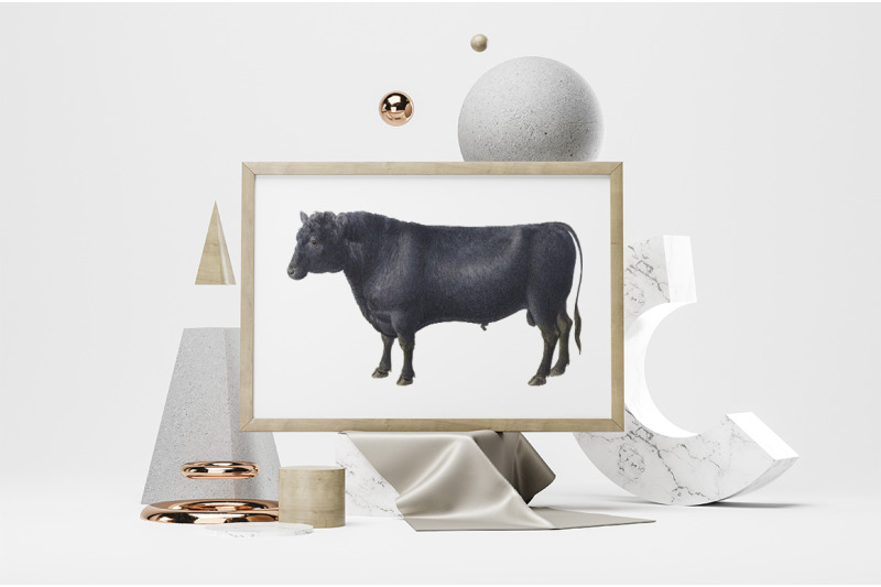 cow-clipart-angus