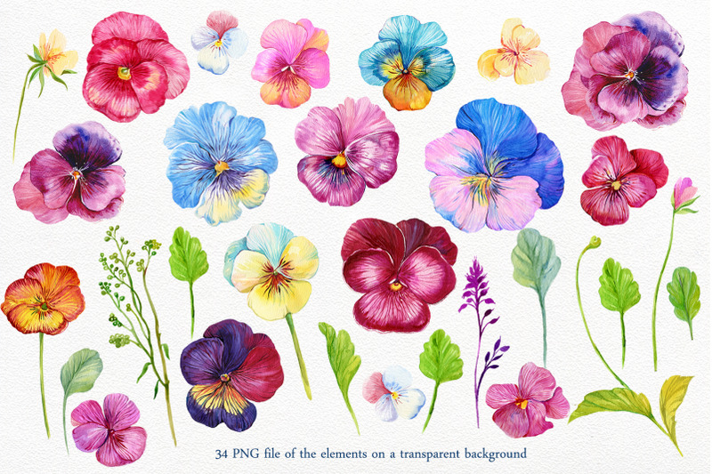 pansy-watercolor-clipart