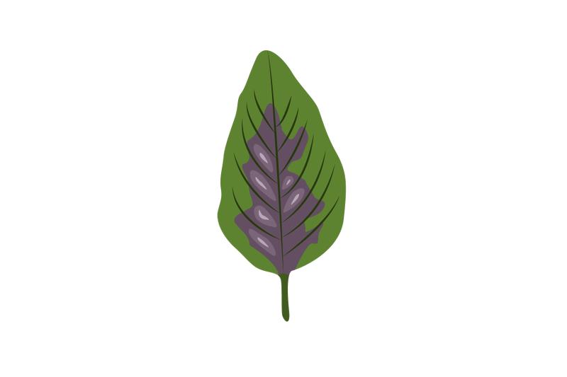 amaranthus-leaf