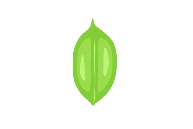 pterocarpus-indicus-leaf