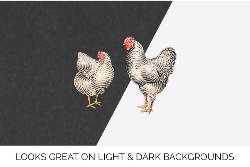 chicken-clipart