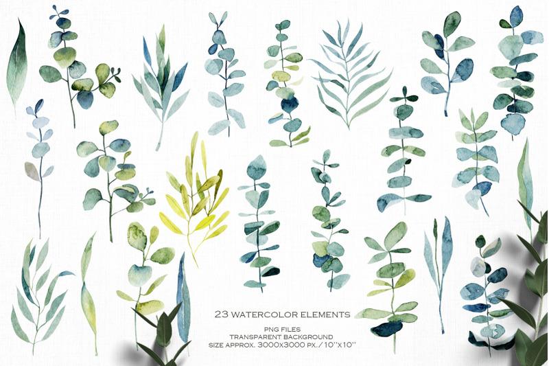 eucalyptus-collection