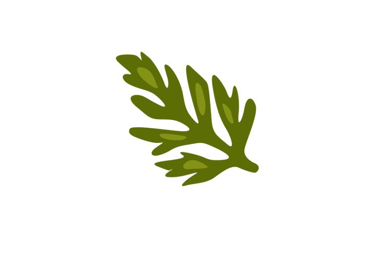 astragalus-gilviflorus-leaf