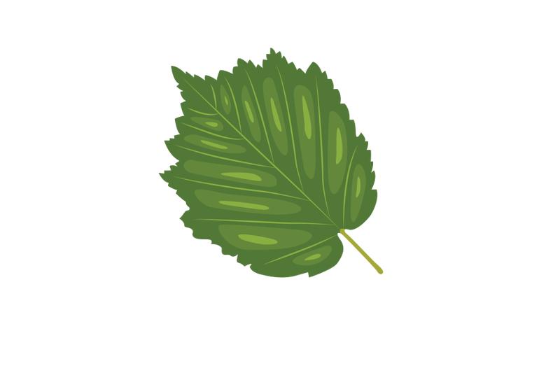 turkish-filbert-leaf
