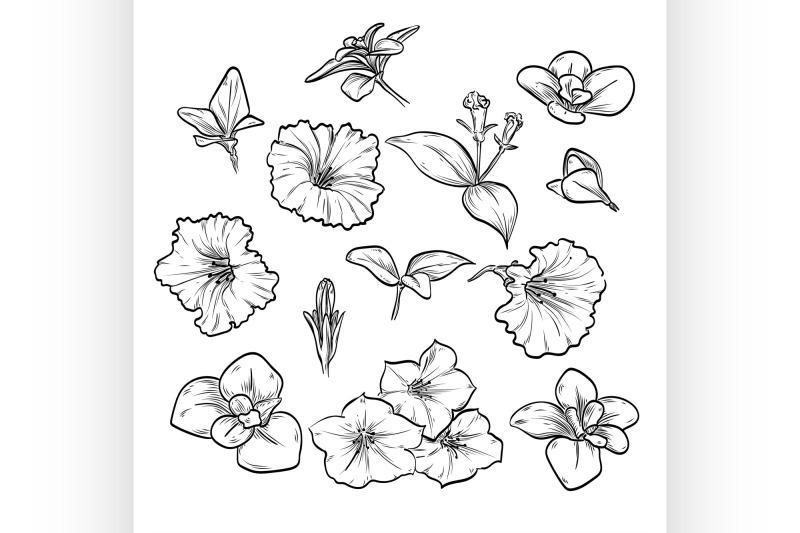 hand-drawn-elegant-petunya