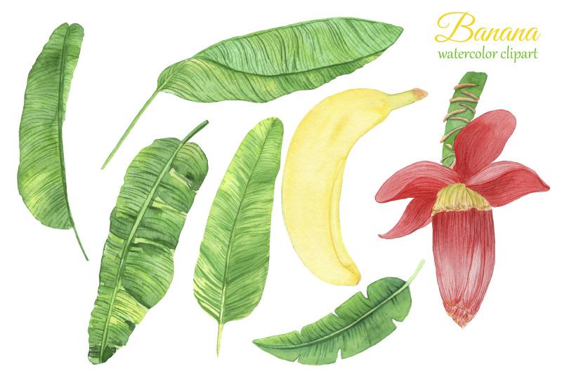watercolor-banana-clipart-banana-flower-png