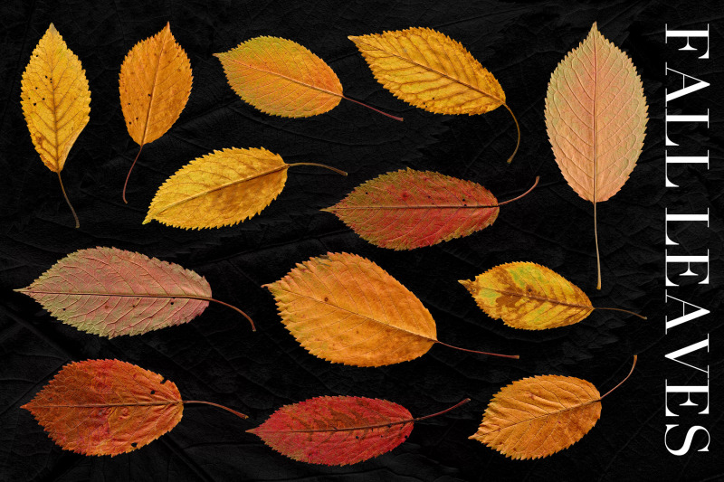 27-isolated-fall-leaves