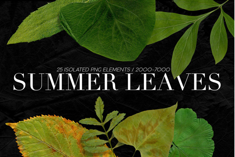 25-isolated-summer-leaves