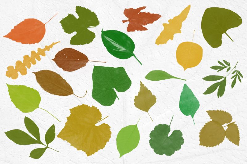 leaves-photoshop-stamp-brushes