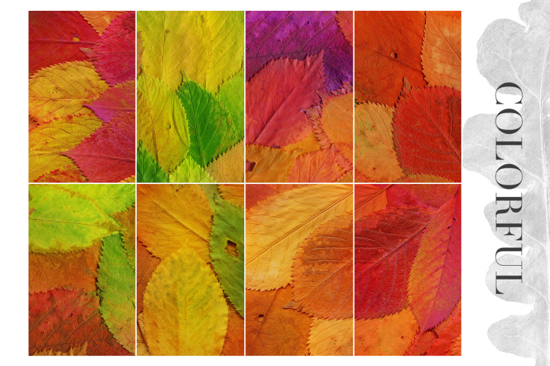 20-colorful-leaves-backgrounds