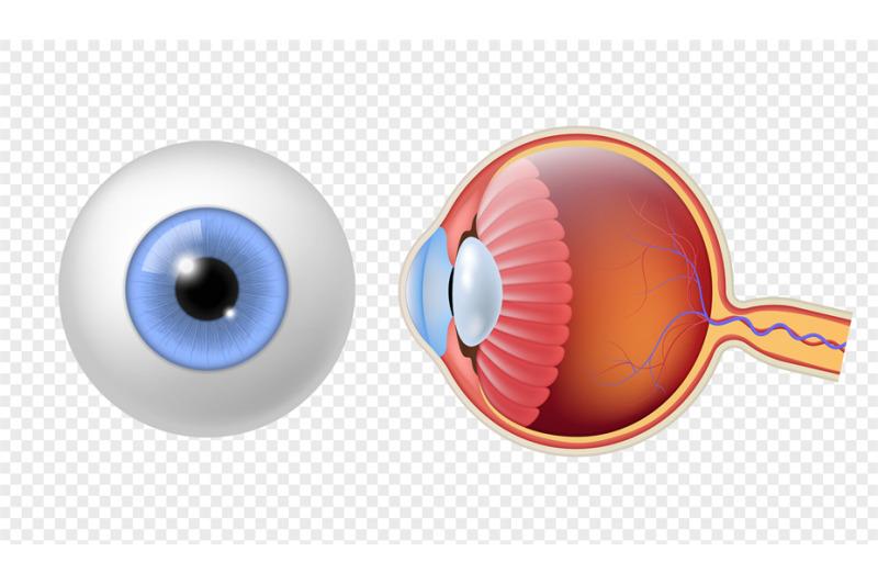 realistic-human-eyeball-eye-retina-structure-round-iris-texture-ana