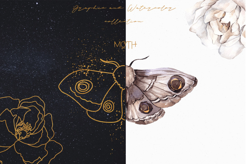 moth-watercolor-and-graphic-collection
