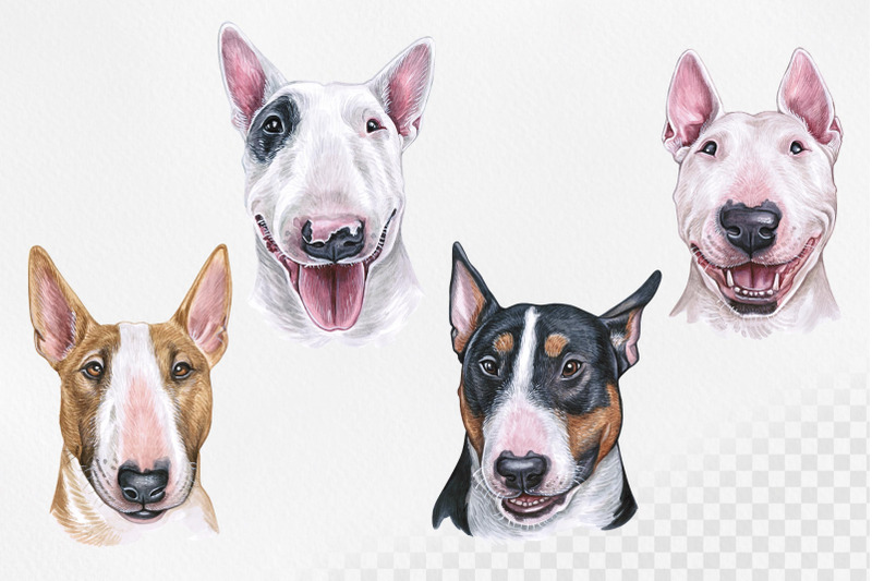 bull-terrier-watercolor-dogs-illustrations-set-cute-8-dogs