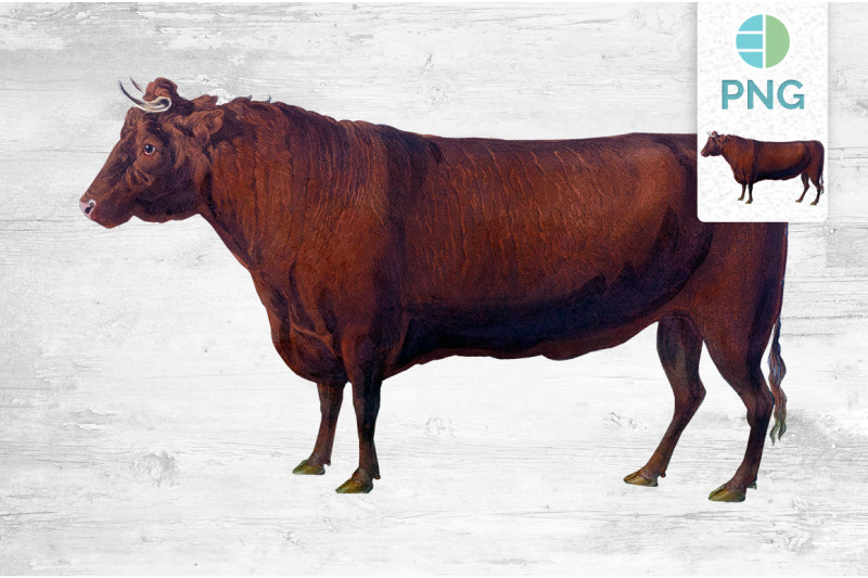 cow-clipart-devon