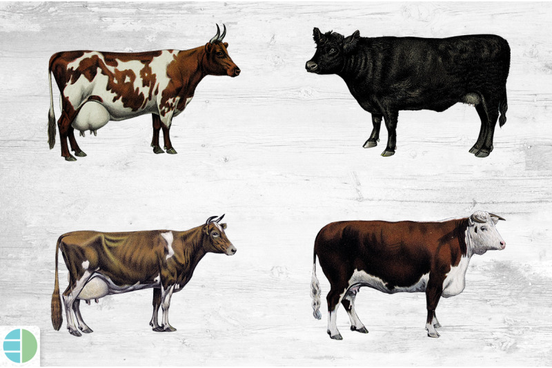cow-bundle